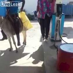 Sérère à l'essencerie pour faire le plein de son âne